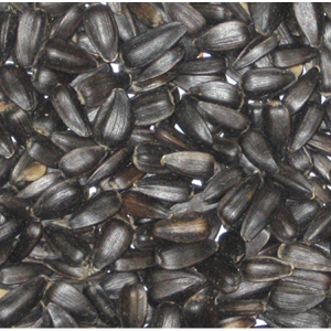 Colonels Black Sunflower Seeds Review