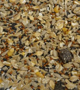 Colonels Summer Feast Wild Bird Seed Review